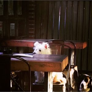 dogs sitting on patio